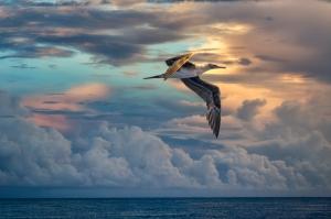 Sunrise Flight - Carol Brooks Parker