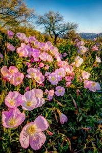 Sonoran Spring AE - Carol Brooks Parker