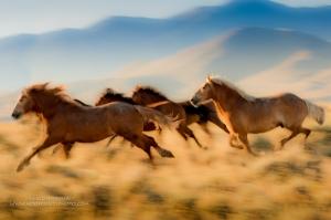 Running_Free